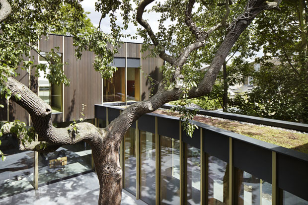 TREE-HOUSE-03