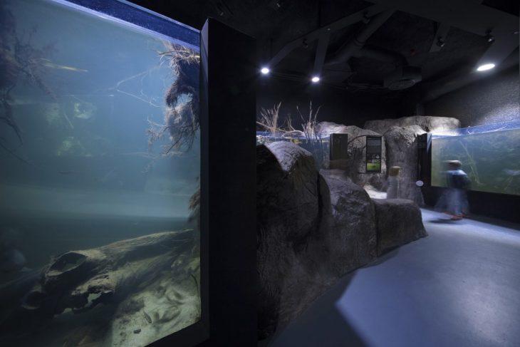 3lhd_224_karlovac_aquarium_photo_by_jure_zivkovic_17
