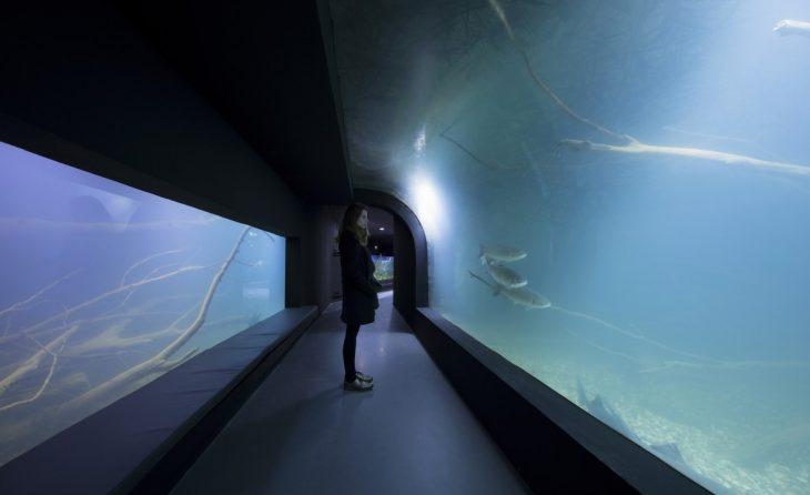 3lhd_224_karlovac_aquarium_photo_by_jure_zivkovic_22