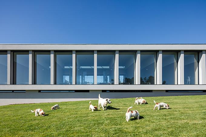 Canine & Feline Hotel by Raulino Silva Arquitecto